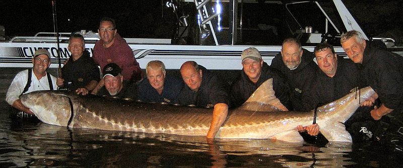 Any STURGEON longer than five feet has to be released unharmed and ...
